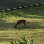 Deer freely roam the property