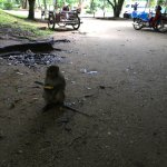 Small Monkey at cave temple