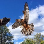 Our free-flight bird shows are exciting and informative!