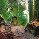 There are eyes along the deep forest paths