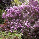 Foto de Milner Gardens & Woodland
