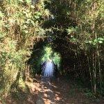 Photo de Andasibe-Mantadia National Park  (Reserve of Perinet)