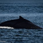 An added bonus...up close with a Humpback Whale!