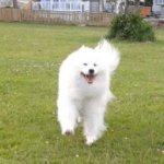 Kimmi loved the off lead dog field to runaround in !!