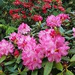 Photo of Pukeiti Rhododendron Garden