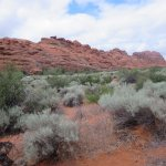 Views of sandstone canyons and desert vegetation