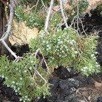 vegetation and lava rocks