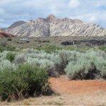 White rocks and desert vegetation--view from picnic area
