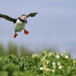 The Farne Islands are on the doorstep