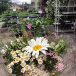 Throughout every season, we carry stunning cut blooms and flowering potted plants.