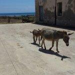 Foto de Parco Nazionale Asinara