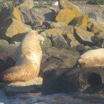 Lightouse Area Where We Saw California Elephant Seals, Sea Lions, Etc, , Orca Spirit Adventures,