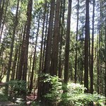 Woods, Point Defiance Park, Tacoma, Washington