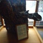 buffalo leg stuck in tree stump