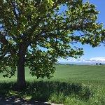 Photo of Seven Stars Tree