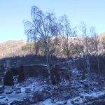 Birches in the Medeu