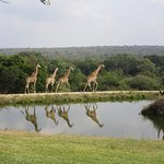 Foto de Elandela Private Game Reserve