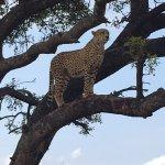 Photo of Rhulani Safari Lodge