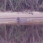 Duck Near Sand Beach