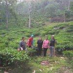 Came across beautiful tea gardens on the way to Majitar