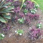 Foto di Naples Botanical Garden