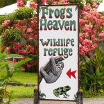 Photo of Frogs Heaven