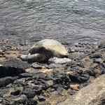 Photo de Marylou's Big Island Guided Tours - Private Tours