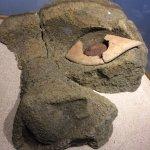 Eye fragment of a moai