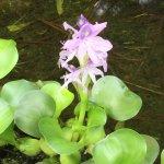 Wilson Botanical Garden Foto