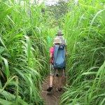 Hiking through New Guinea Grass