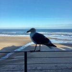 Foto de Pelican Shores Inn
