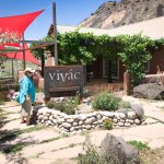 Vivac Winery