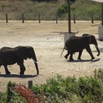 Zoom photo of elephants playing across the road from our deck