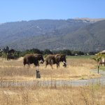 Christy holding Paula's tail as the elephants accompany breakfast delivery