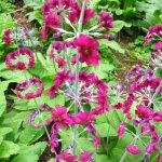 Flowers At Milner Gardens