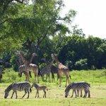 Chinzombo - Norman Carr Safaris Foto