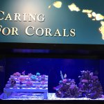 Caring for Corals