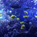 Beautiful marine fishes