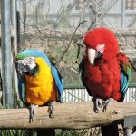 Photo de Maleny Botanic Gardens & Bird World