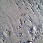 walking in the sand after dining at Mo's
