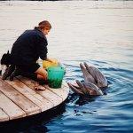 repas des dauphins