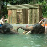 Enjoy with elephant in the pool.