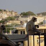 monkeys # chilling.