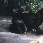 Fotografie: Zoo Děčín