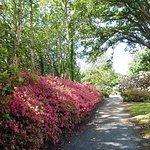 Mount Congreve House and Gardens Foto