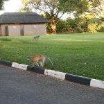 Photo of Elephant Hills Resort