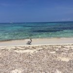 Photo of Ranguana Tropical Island Experience