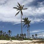 Photo de Nisbet Plantation Beach Club