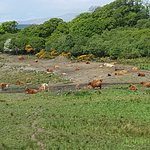 Photo of Shenavallie Farm