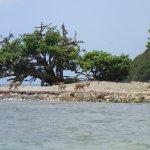 Monkeys on the island